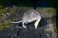 Controlling mice effectively