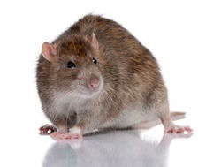 The Types Of Damage Rodents And Other Pests Can Do To Your