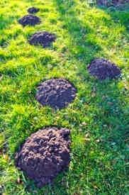 molehills-in-garden