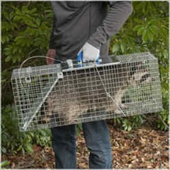 Features of a good Raccoon trap