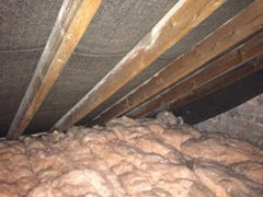 Rats In The Attic What Do You Do Pest Control Products