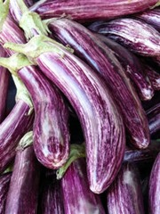 A bundle of striped eggplants