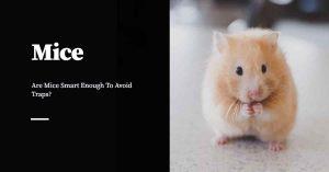 Smart Mice
