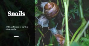 There are Many Types of Garden Snails