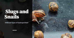 The Many Types of Slug and Snail Bait?