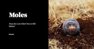 Killing Moles