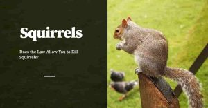 The Law and Killing of Squirrels