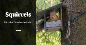 Facts About Squirrels