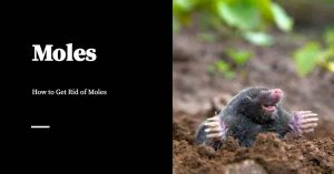 Getting Rid of Moles