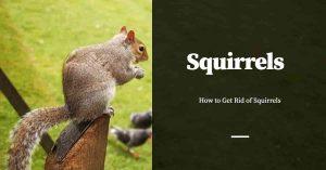 Gettting Rid of Squirrels