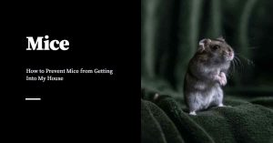 Stop Mice from Getting Into My House