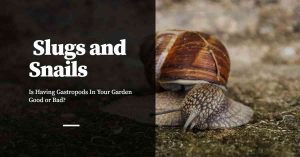 Slugs and Snails - Good or Bad?