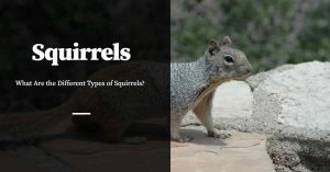 Different Types of Squirrels