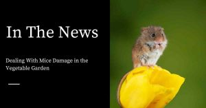 Mouse Damage