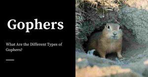 Killing Gophers