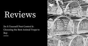 DIY Best Animal Traps