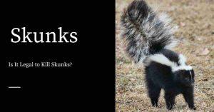 Killing Skunks