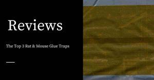 Rat & Mouse Glue Traps