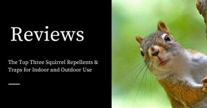Squirrel Repellents