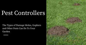 Damage Moles and Gophers Can Do To Your Garden