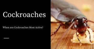 Active Cockroaches