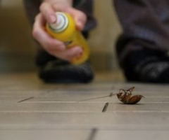 Killing cockroaches with a can of spray
